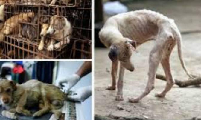 SOS linija: Najviše prijava nasilja nad životinjama